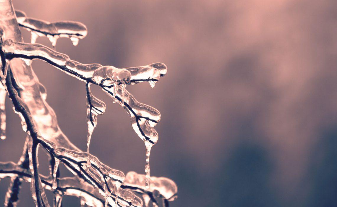 branch_ice