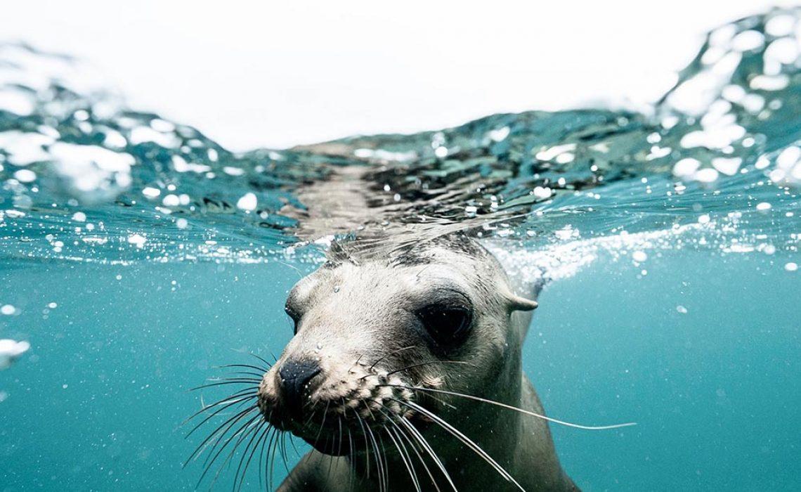 seal_water